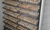 Photo de l'annonce: Couveuse incubateur 1100 oeufs