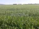 Photo de l'Annonce: ارض مزرعة فلاحية 20 هكتارجاهزة منطقة  ازعير الرباط