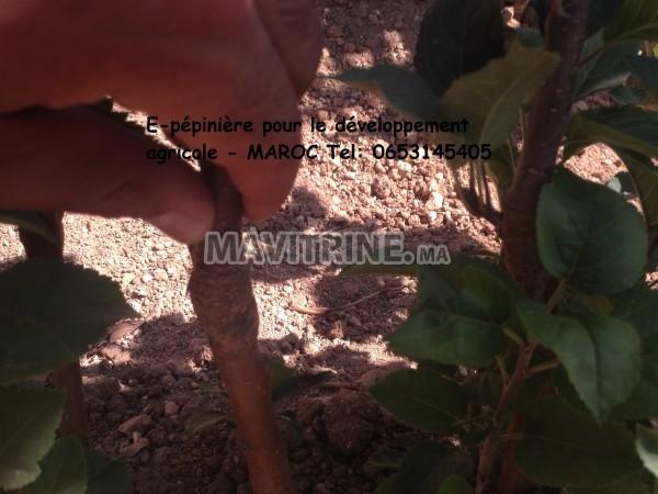 E-pépinière pour le développement agricole - MAROC