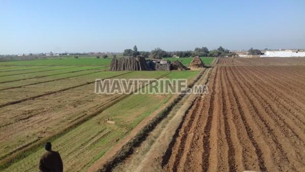 terrain agricole irrigué et titré