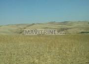 Photo de l'annonce: terrain agricole 100 hectar