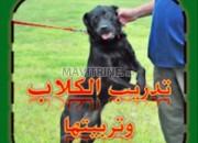 Photo de l'annonce: Dressage du chiens