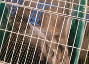 Photo de l'annonce: Vente lapin