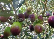 Photo de l'annonce: ferme titré region kamouni 30090 m2