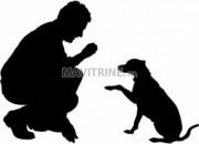 Photo de l'annonce: Dresseur du chiens