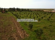 Photo de l'annonce: ferme et petite villa titré région kamouni
