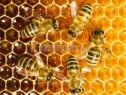 Photo de l'Annonce: Miel et huile de coco  importé