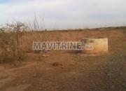 Photo de l'annonce: Terrain agricole à tassaout béni aamer