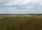 Photo de l'annonce: Un terrain de 12500m à région birjdid