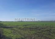 Photo de l'annonce: Terrain de 3 hectares à birjdid sur la route