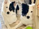 Photo de l'Annonce: Dresseur des chiens