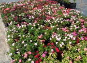 Photo de l'annonce: Jardinier/gardien Rabat