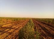 Photo de l'annonce: Ferme d'olivier 11 ha à 10 km de chichaoua
