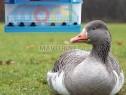 Photo de l'Annonce: L'incubateur Chez Wopl A Une Capacité Très Grande