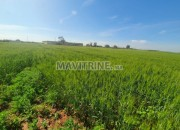 Photo de l'annonce: TERRAIN AGRICOL A VENDRE
